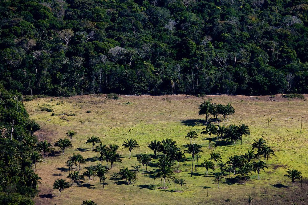 Fazenda Sao Judas Tadeu (cattle farm) in Mato Grosso, Brazil, August 6, 2008. Daniel Beltra/Greenpeace