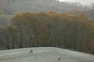 4/12/13 - PLATEAU DE MILLEVACHES - CORREZE - FRANCE - Photo Jerome CHABANNE