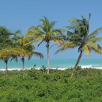 view to Beach, Canaveral, Park Tayrona, Parque Nacional Tayrona, Department Magdalena, Colombia