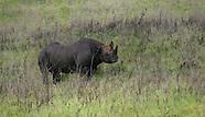 Rhinos - Kifaru