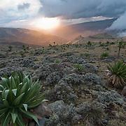Chennek hillshides at sunset