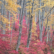 Fall foliage in the Delaware Water Gap