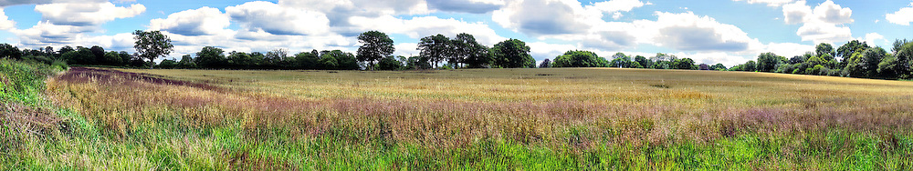 A panorama of a grassy field photographed in Walstead, West Sussex, England.