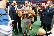 Stump(Sussex Spaniel), at The 133rd Westminister Annual All Breed Dog Show Finals held at Madison Square Garden on February 10, 2009..It is, quite simply the greatest tradition in the world of dogs.  For the 133rd consecutive year, the Westminister Kennel Club will once again bring together the world's very best dogs in the world's greatest sporting arena to compete for the most coveted title in the sport: Best in Show at the Westminister Kennel Club All Breed Dog Show.
