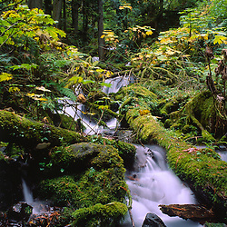 Wahkeena Stream and Waterfall, Columbia River Gorge National Scenic Area, Oregon, US