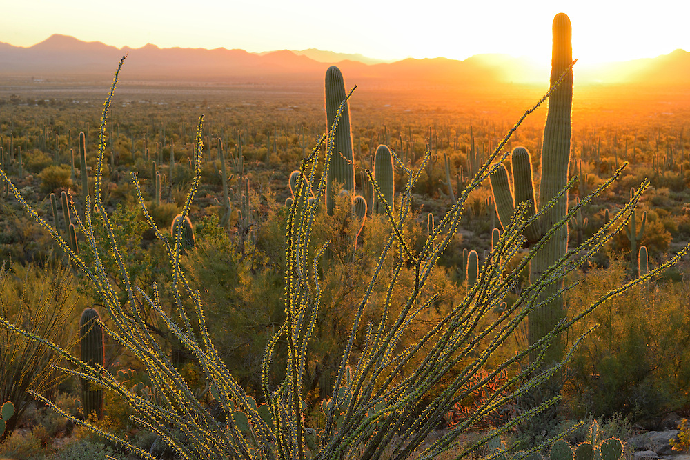 USA,Arizona,Tucson, Saguaro National Park; sunset seen from signal mountain in Saguaro National Park west unit,