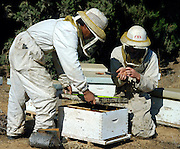Two Bee Keepers removing honey from a beehive