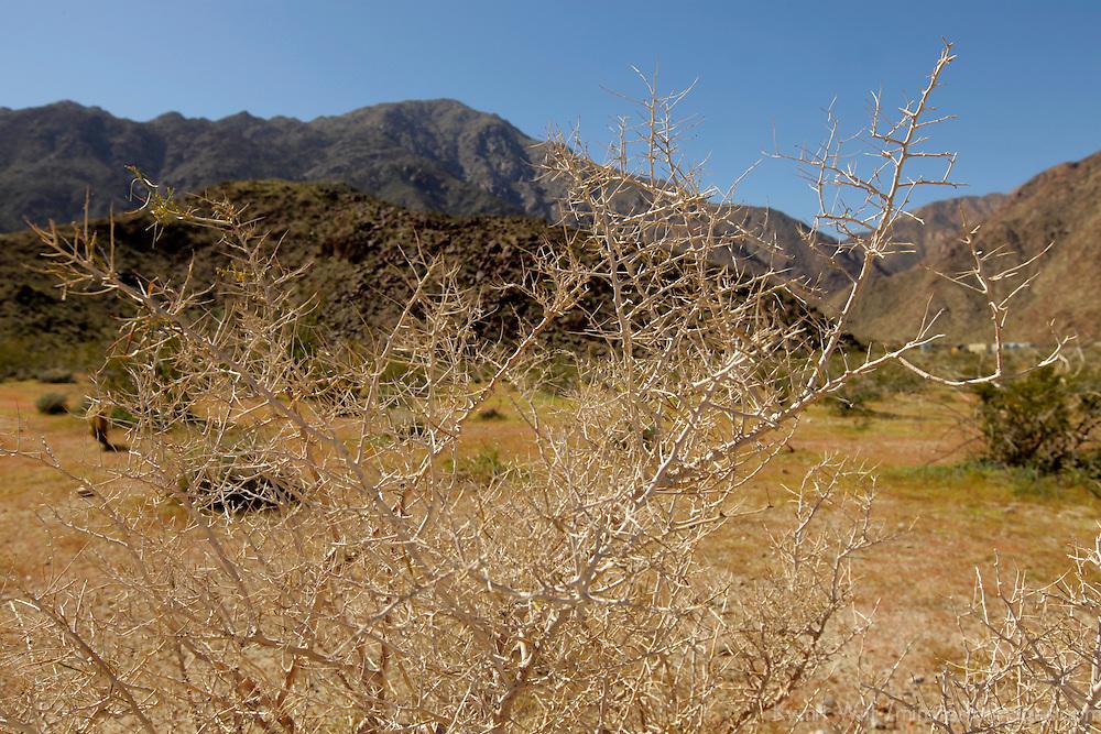 USA, California, San Diego County. Anza-Borrego Desert State Park landscape.