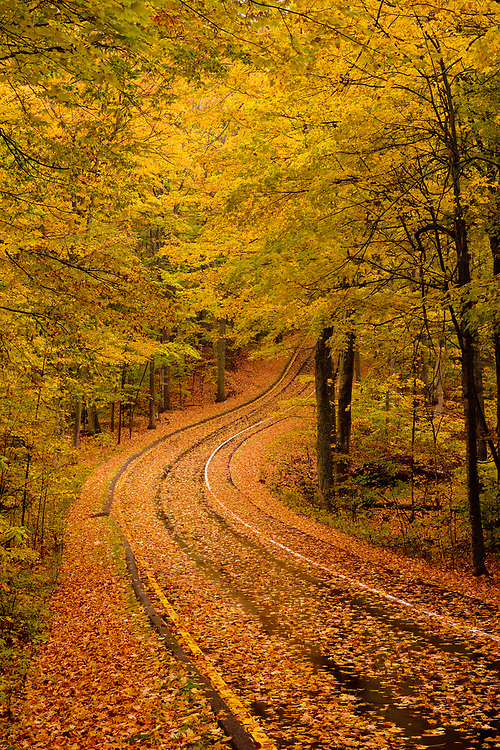 Fallen leaves on a rainy day make for a beautiful car ride on Stocking Drive, Sleeping Bear Dunes National Lakeshore.