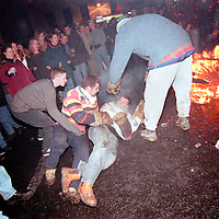 """BARREL MAN FALLS OVER"".TAR BARRELS OF OTTERY ST MARY EAST DEVON..BY RUPERT RIVETT©2003..07771928201 .(01273)695107"