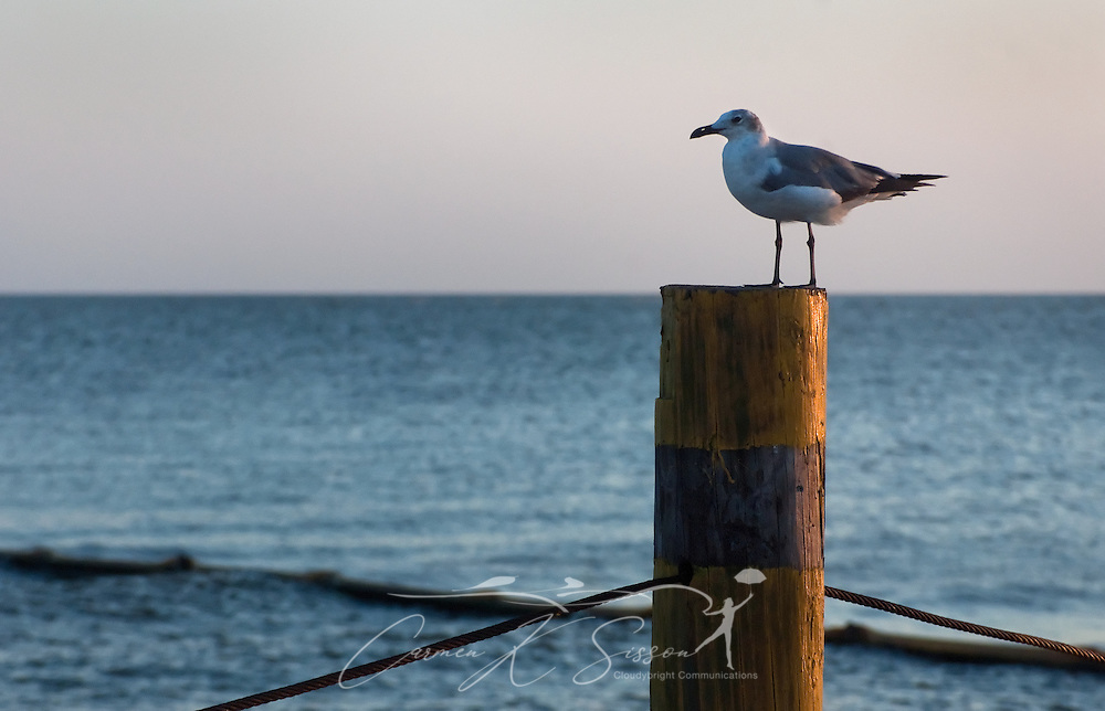 A seagull perches on a pylon at the site of the former state docks in Bayou La Batre, Ala. July 3, 2010. In the background, containment boom protects the shoreline from oil, which continues to pour into the Gulf of Mexico following the Deepwater Horizon oil rig explosion April 20, 2010. (Photo by Carmen K. Sisson/Cloudybright)