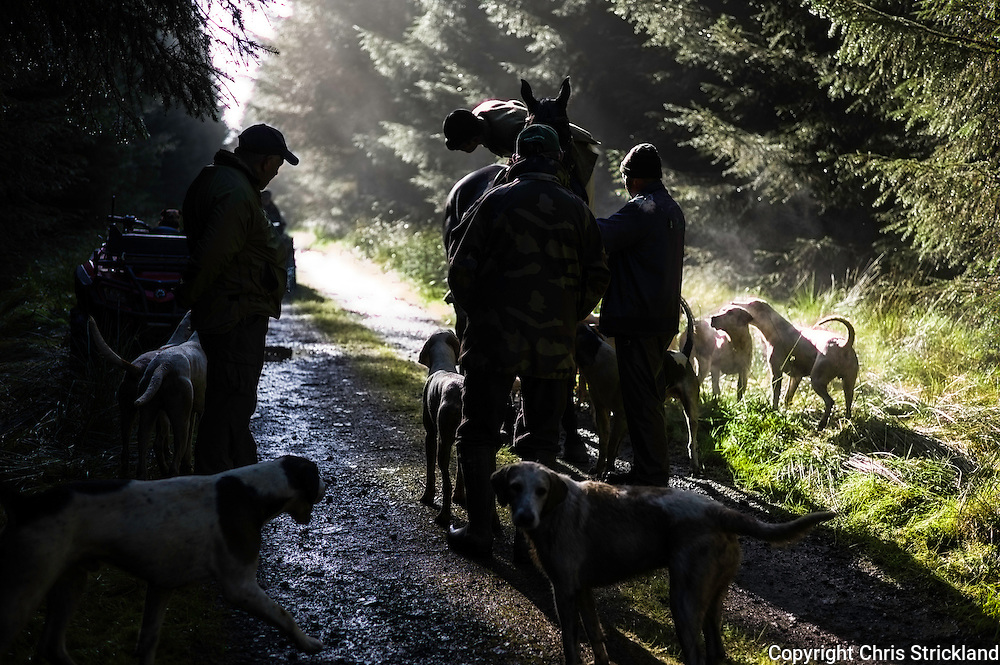 Edgerston, Jedburgh, Scottish Borders, UK. 24th September 2015. The Jedforest Hunt makes it way up a forestry track during a mornings autumn hunting.