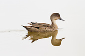 Grey Teal Pictures - Photos
