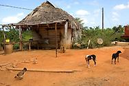 A farm yard in Pinar del Rio, Cuba.