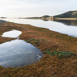 Salt Marsh on the edge of the Heuningness River and Estuary, De Mond Nature Reserve, Western Cape, South Africa