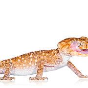 Reptiles on White