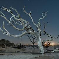 American Nightscapes / Driftwood Beach<br /> <br /> USA,Georgia,Jekyll Island, Driftwood beach