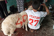 Young Hüseyin, wearing an Atatürk T-shirt here, holds a marked sacrificial ram in a bloody garage box in Gaziantep, Turkey, on the first day of the annual islamic Feast of Sacrifice.