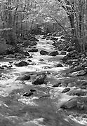 Woodland Stream Rapids