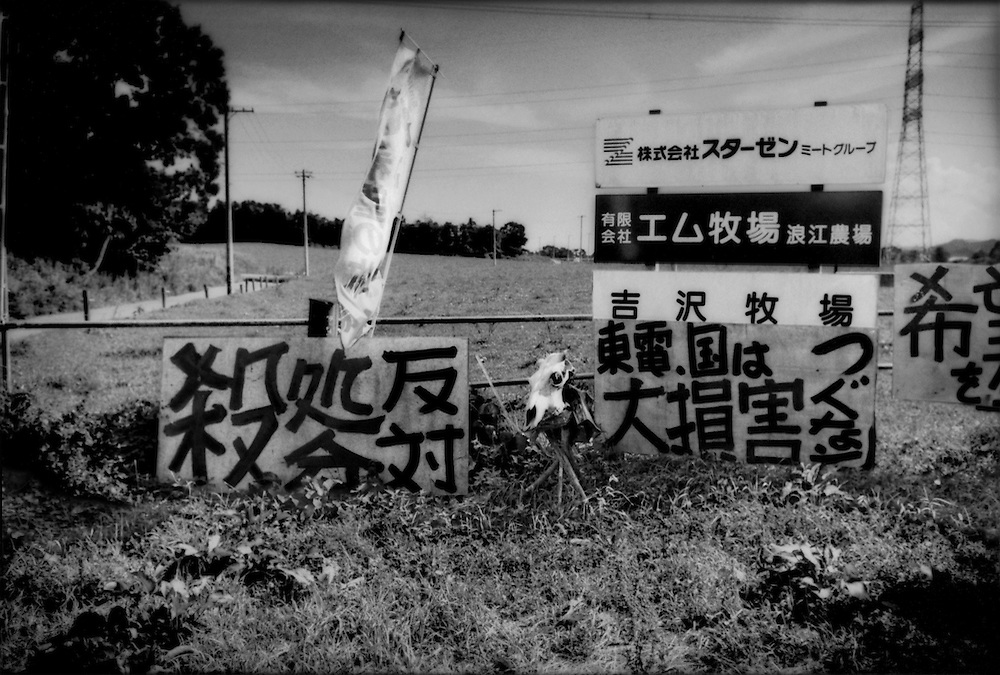Signs pleading for feral cattle, set free by dairy farmers inside the nuclear no-entry zone, to be saved at the entrance to Masami Yoshizawa's dairy farm right on the new nuclear no-entry zone line.  The line was moved in April 2012 to the Namie-machi line.    Namie-machi, Fukushima Prefecture, Japan.
