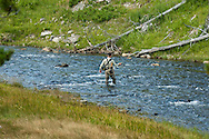 Fly Fishing, Firehole River, Yellowstone National Park