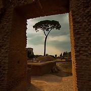 A door-framed tree on Palatine Hill, Rome, Italy