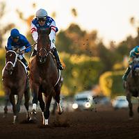 December 26, 2015: Runhappy with Gary Stevens wins the Malibu Stakes at Santa Anita Park, Arcadia CA. Evers/ESW/CSM
