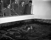 1958 - Gilbert the Hippopotamus arrives at Dublin Zoo