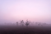 A foggy morning in the Big Cypress National Preserve near the Gator Hook Strand off of Loop Road near Ochopee, Florida