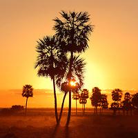 Sunset and Palm trees, Estancia, Esteros del Ibera, Carlos Pellegrini, Corrientes, Argentina, South America