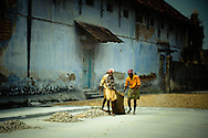 India, Kochi. Men working in the old ginger factory.<br /> <br /> Kochi was known for a long time as the main centrum of Indian spice trade. Although today it's only a shadow of its former glory, walking on Bazaar Road in Mattancherry still it's possible to feel its atmosphere, meet the traders of famous  specialities of Kerala, visit old Indian ginger factory  and smell the Indian spices.