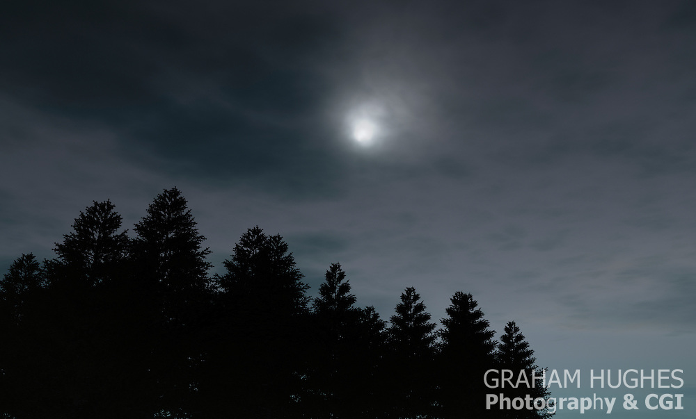 Tree Line With Moon.