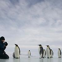 Antarctica, Snow Hill Island, Tourists from cruise aboard Russian Icebreaker I/B Kapitan Khlebnikov at emperor penguin rookery