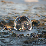 Crystal ball in tidal pool, Jekyll Island Georgia, winter.