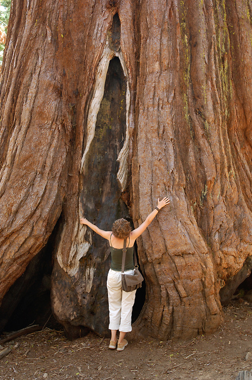 Person standing in front of Redwood Tree, Mariposa Grove, Yosemite National Park, California, United States of America