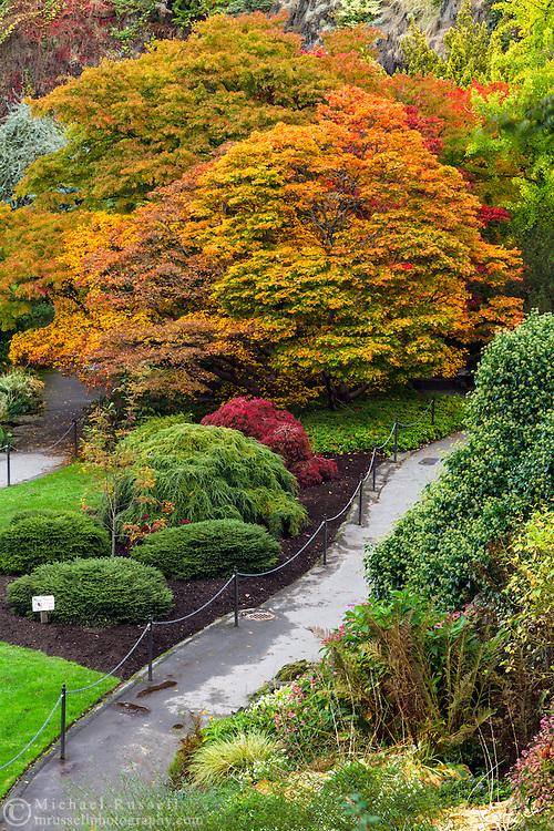 Fall at the gardnes in Queen Elizabeth Park in Vancouver, British Columbia, Canada