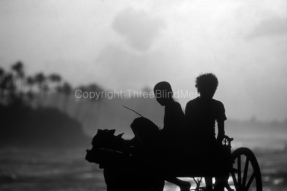 Sri Lanka. <br /> Boys on a bullock cart, south coast.