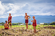 Novice monks tend to some gardening on the shores of Inle Lake, central Myanmar