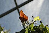 Butterfly Exhibit 2006