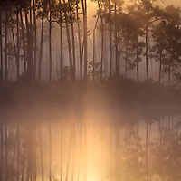 Morning sun filters through fog and pine trees on the island in Long Pine Key pond in Everglades National Park, Florida. WATERMARKS WILL NOT APPEAR ON PRINTS OR LICENSED IMAGES.