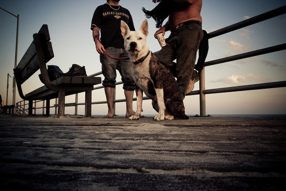 A dog waits patiently while his owner chats with a friend on the boardwalk at Rockaway Beach, Queens, NY.