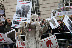 FEB 13 2014  Demonstration near Illegal Wildlife Trade Conference