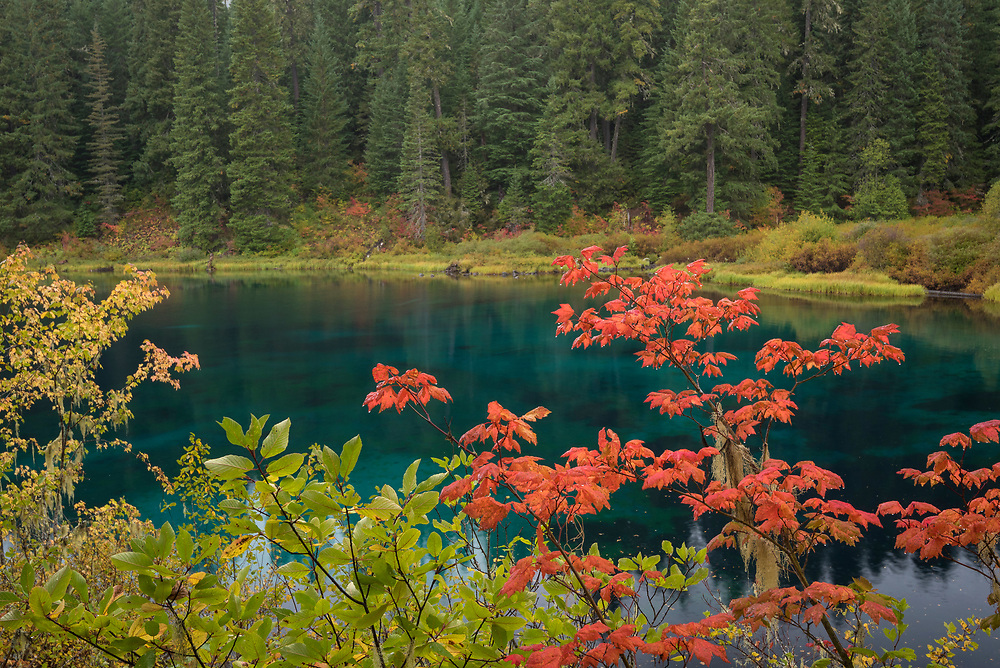 Fall color on the McKenzie River Trail at Clear Lake, Oregon.