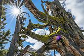 Oregon: East: Wallowa: Eagle Cap Wilderness