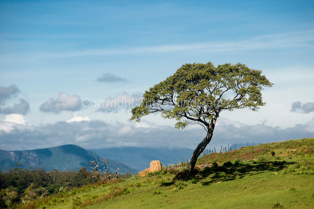 Ambewela is the area just below the Horton Plains. Many dairy cattle farms are situated here at this altitude.