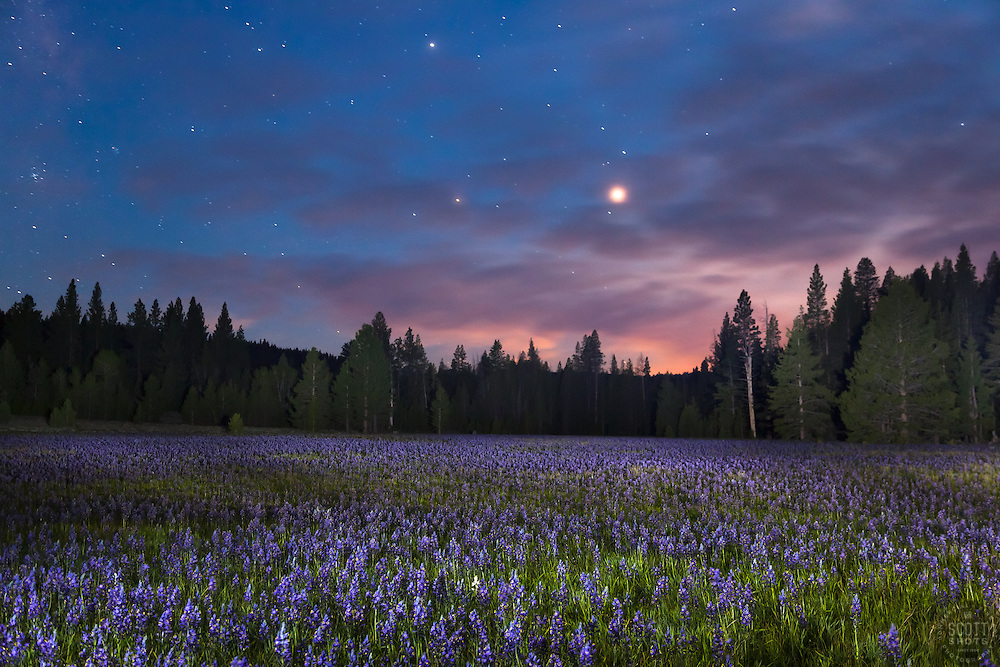 """""""Sagehen Meadow at Night 1"""" - Photograph of the Camas wildflowers at Sagehen Meadows, near Truckee, California at night."""