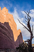 Twisted tree silhouette and red rock shadows, in Arches National Park, near Moab, Utah, USA. A thick underground salt bed underlies the creation of the park's many arches, spires, balanced rocks, sandstone fins, and eroded monoliths. Some 300 million years ago, a sea flowed into the area and eventually evaporated to create the salt bed up to thousands of feet thick. Over millions of years, the salt bed was covered with debris eroded from the Uncompahgre Uplift to the northeast. During the Early Jurassic (about 210 million years ago) desert conditions deposited the vast Navajo Sandstone. On top of that, about 140 million years ago, the Entrada Sandstone was deposited from stream and windblown sediments. Later, over 5000 feet (1500 m) of younger sediments were deposited and then mostly worn away, leaving the park's arches eroded mostly within the Entrada formation.