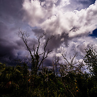 Low trees are silhouetted against approaching storm clouds in Everglades National Park, Florida.<br />