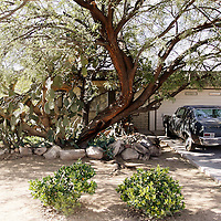 A large tree blocks the view of the home of Jared Lee Loughner, 22, who is accused of killing six people dead and wounding 13 others in Tucson, Arizona January 10, 2011.  REUTERS/Rick Wilking (UNITED STATES)