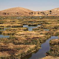 South America, Bolivia, Kala Uta Island. Reed path in water to Kala Uta Island in Lake Titicaca.